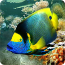 Tropical Fish live wallpaper